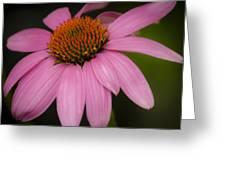 Hot Pink Coneflower Greeting Card
