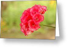 Hot Pink Geranium Greeting Card