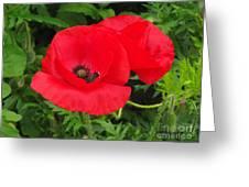 Hot Poppy Greeting Card