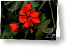 Hot Red Greeting Card
