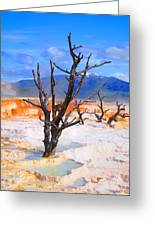 Hot Spring Trees Greeting Card