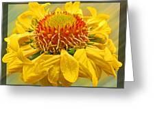 Hot Summer Daze Greeting Card