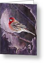 House Finch Looking At Me Greeting Card