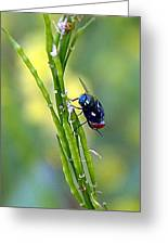 House Fly On Mustard Stem Greeting Card