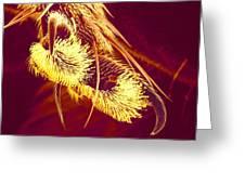 Hover Fly Foot, Sem Greeting Card by Susumu Nishinaga