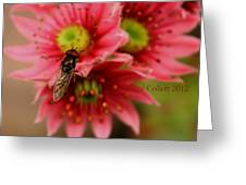 Hover Fly II Greeting Card by Jacqui Collett