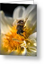 Hoverfly On White Flower Greeting Card