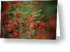 Huckleberry Leaves In Fall Color Greeting Card by One Rude Dawg Orcutt
