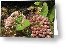 Huge Bumble Bee Greeting Card