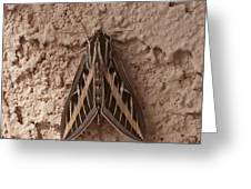 Huge Moth On Stucco In Las Vegas Greeting Card