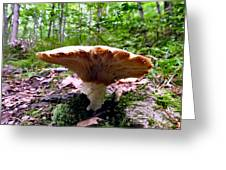 Huge White Wild Mushroom Greeting Card