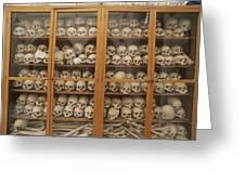 Human Skulls And Femurs Fill A Display Greeting Card by Tino Soriano
