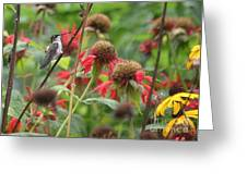 Hummer At Rest Greeting Card