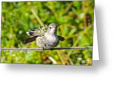 Hummer Takes A Shower Greeting Card