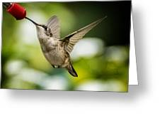 Hummers In The Garden Two Greeting Card by Michael Putnam