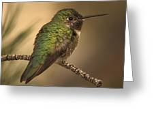 Humming Bird On Branch Greeting Card