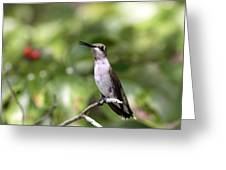 Hummingbird - Berries Greeting Card