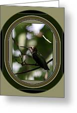 Hummingbird - Card - Glint Of The Eye Greeting Card