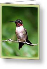 Hummingbird - Male - Will Soon Be Grown Greeting Card