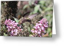 Hummingbird - Ruby-throated Hummingbird - Chopper Greeting Card