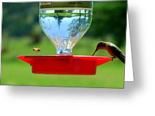 Hummingbird And A Bee Greeting Card