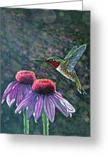 Hummingbird And Cone Flowers Greeting Card by Diana Shively