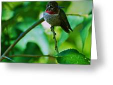 Hummingbird At Rest Greeting Card