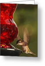 Hummingbird At The Feeder Greeting Card