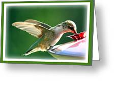 Hummingbird Eating Greeting Card