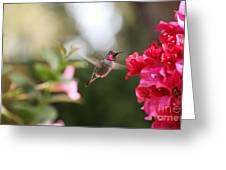 Hummingbird In Bougainvillea Greeting Card