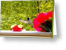 Hummingbird In Cuenca Ecuador Vii Greeting Card