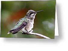 Hummingbird - Little Friend Greeting Card