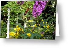 Hummingbird Moth In Flight  Greeting Card