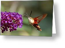Hummingbird Moth Greeting Card