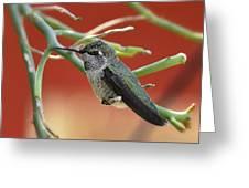 Hummingbird Nap Time  Greeting Card