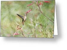 Hummingbird Nourishment Greeting Card