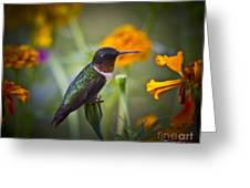 Hummingbird On Guard - Artist Cris Hayes Greeting Card