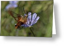Hummingbird Or Clearwing Moth Din137 Greeting Card