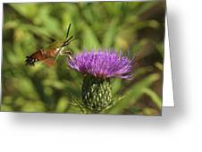Hummingbird Or Clearwing Moth Din141 Greeting Card