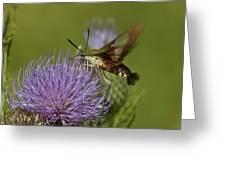 Hummingbird Or Clearwing Moth Din178 Greeting Card