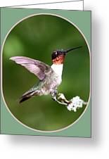 Hummingbird Photo - Light Green Greeting Card