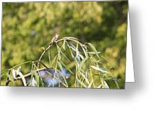 Hummingbird Resting In The Willow Greeting Card