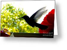 Hummingbird Series 11 Greeting Card