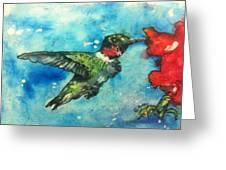 Hummingbird Sips Greeting Card