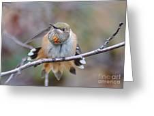 Hummingbird Stretch Two Greeting Card