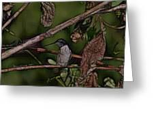 Hummingbird Waiting For Dinner Greeting Card