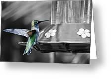Hummingbird Wings II Greeting Card