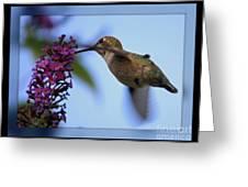 Hummingbird With Blue Border - Digital Painting Greeting Card