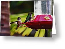 Hummingbirds At The Feeder Greeting Card
