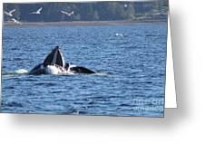 Hump Back Whale In Alaska Greeting Card